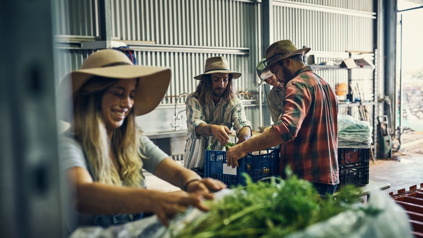 Farm workers packing vegetables in crates in a shed